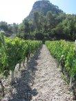 Vente Vignoble et batiment agriculture plus appartement