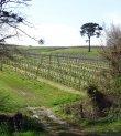 Domaine Viticole de 8.6 ha dont 7.40ha de vignes en