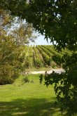 Prestigieux domaine viticole en AOC Saint-Emilion Grand