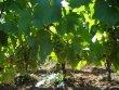 Domaine viticole en culture Bio sur 36 ha dans l