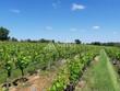 Domaine viticole 20ha caveau vente directe