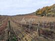 Parcelles de vignes Chardonnay et Pinot