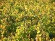 Propriété viticole de 5 hectares en AOC Saint-Émilion