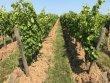 Domaine viticole de 19 hectares en AOC Montagne Saint-Émilion