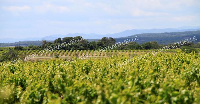 Parcelle de vignes vendre dans le beaujolais - Connaitre proprietaire parcelle ...