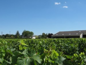 The prices of vineyards in 2011 varied according to the winegrowing-area
