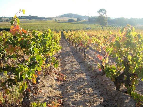 domaine viticole en corbi res de 36 ha de vignes cave vinaire logements et. Black Bedroom Furniture Sets. Home Design Ideas
