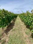 Large-Bordeaux-mixed-vineyard-and-agricultural-estate-on-sale