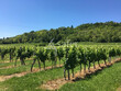Propriete-viticole-en-appellation-Bergerac-sur-24-ha-environ-e